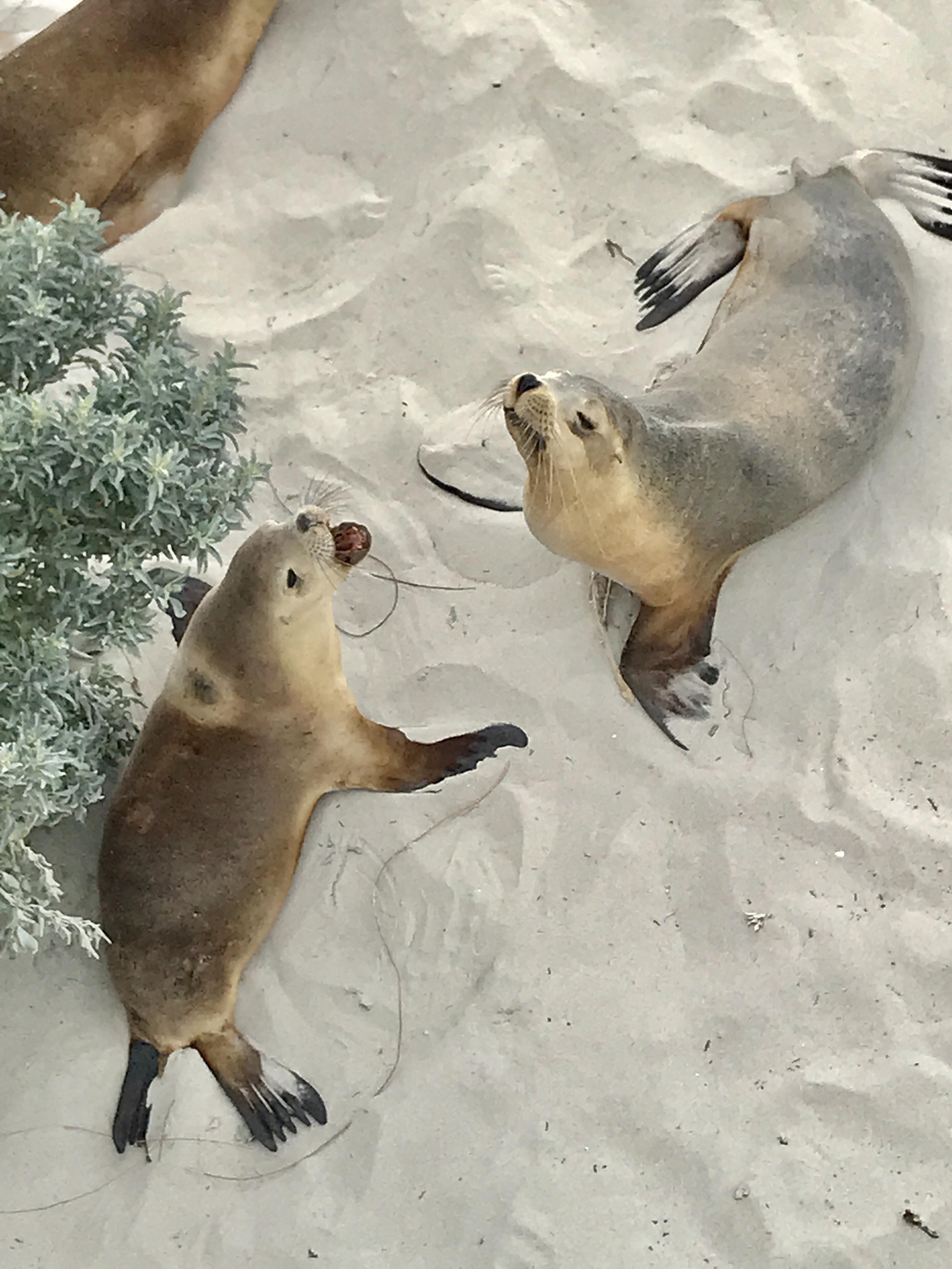 Kangaroo Island uit het boek Australië: een reis door het zuiden van Lisanna Weston namens Dutchies Travel